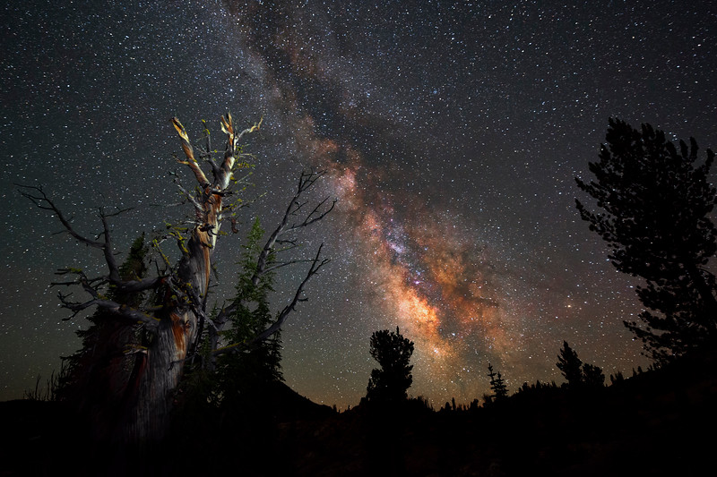 Starry Night, Sawtooth Mountains - Idaho<br /> <br /> At 9,200 ft., high in the remote valley I call Fairy Meadows, the Milky Way presents a dazzling display of color and light - under a moonless sky. Gnarled ancient whitebark pines have stood here, watching this brilliant night show, for perhaps a thousand years. I was indeed blessed to be in this place, at this time of the lunar month, and without a hint of distant forest fires.