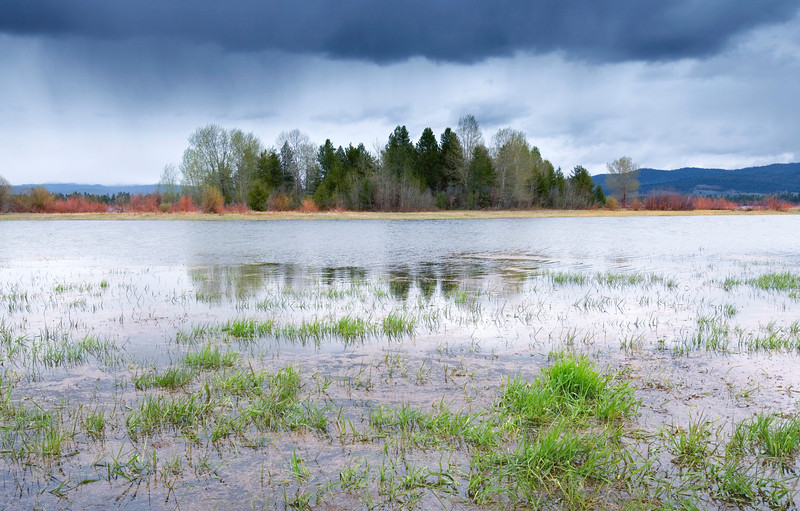 Buttercup Island, Cascade - Idaho<br /> <br /> Springtime greens up the water plants and drenches the trees with sweeping rain.