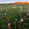 Prairie Smoke, Stanley Basin - Idaho<br /> <br /> Early morning in the Stanley Basin - the grasses still cold and wet from the night, and the distant mountains warm and dry - kissed by the morning sun. The odd flower in the foreground is called Prairie Smoke (Geum triflorum) and, until discovered by Lewis and Clark in 1806, was previously unknown to science.