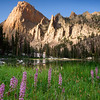 Elephants Perch, Sawtooth Mountains - Idaho<br /> <br /> Delicate pink 'elephant head' flowers grow quickly along the marshy edges of Saddleback Lake. The 1000 foot pink granite walls of the quizically named 'Elephants Perch' is in direct juxtuposition to such tiny similarly named plants.
