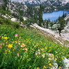 Baron Lake, Sawtooth Mountains - Idaho<br /> <br /> This image was taken during a descent from the small peak known as the Lions Head. The columbine were just bloomed out and instead of the vivid red, which is most common in the nooks and crannies of the Sawtooths, they were a soft pink.