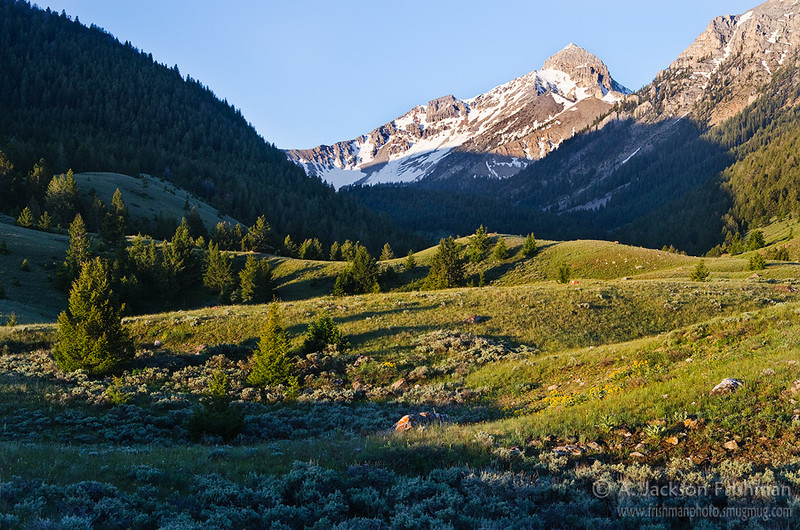 Morning in Bell Mountain Canyon, Lemhi Mountains, Idaho, July 2011.