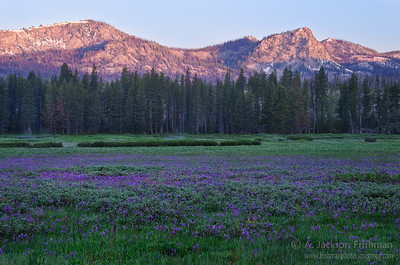 Shooting stars cover Corduroy Meadows in Idaho's Frank Church-River of No Return Wilderness, July 2011.