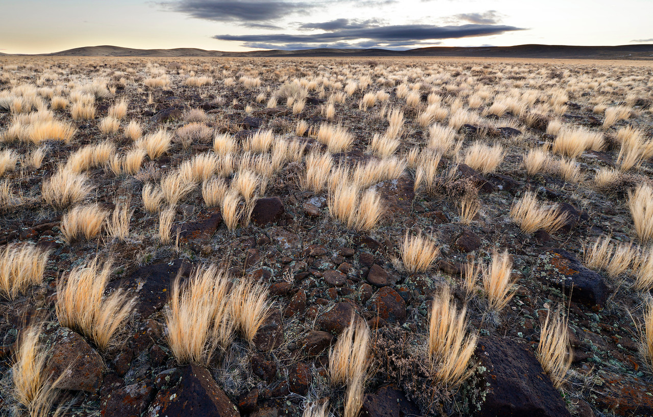 Near the Wickahoney Road - Idaho<br /> <br /> Across the basalt plateaus of the Owyhee desert are few roads. Here, the road simply disappears - as do many of the two-track trials in the southern Idaho desert.