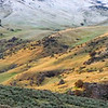A Dusting of Snow, Boise Foothills - Idaho<br /> <br /> A light April snow slows the green of spring, but seems to have little effect on the scattered grazing cattle in the Boise foothills.