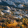 Blue and Gold, City of Rocks - Idaho<br /> <br /> When the aspen change color at the City of Rocks - it happens fast. There may only be one week of true fall colors before temperatures plummet, the leaves just turn brown and black, and the winds race across the desert and stripe the zebra-stripped trunks naked.