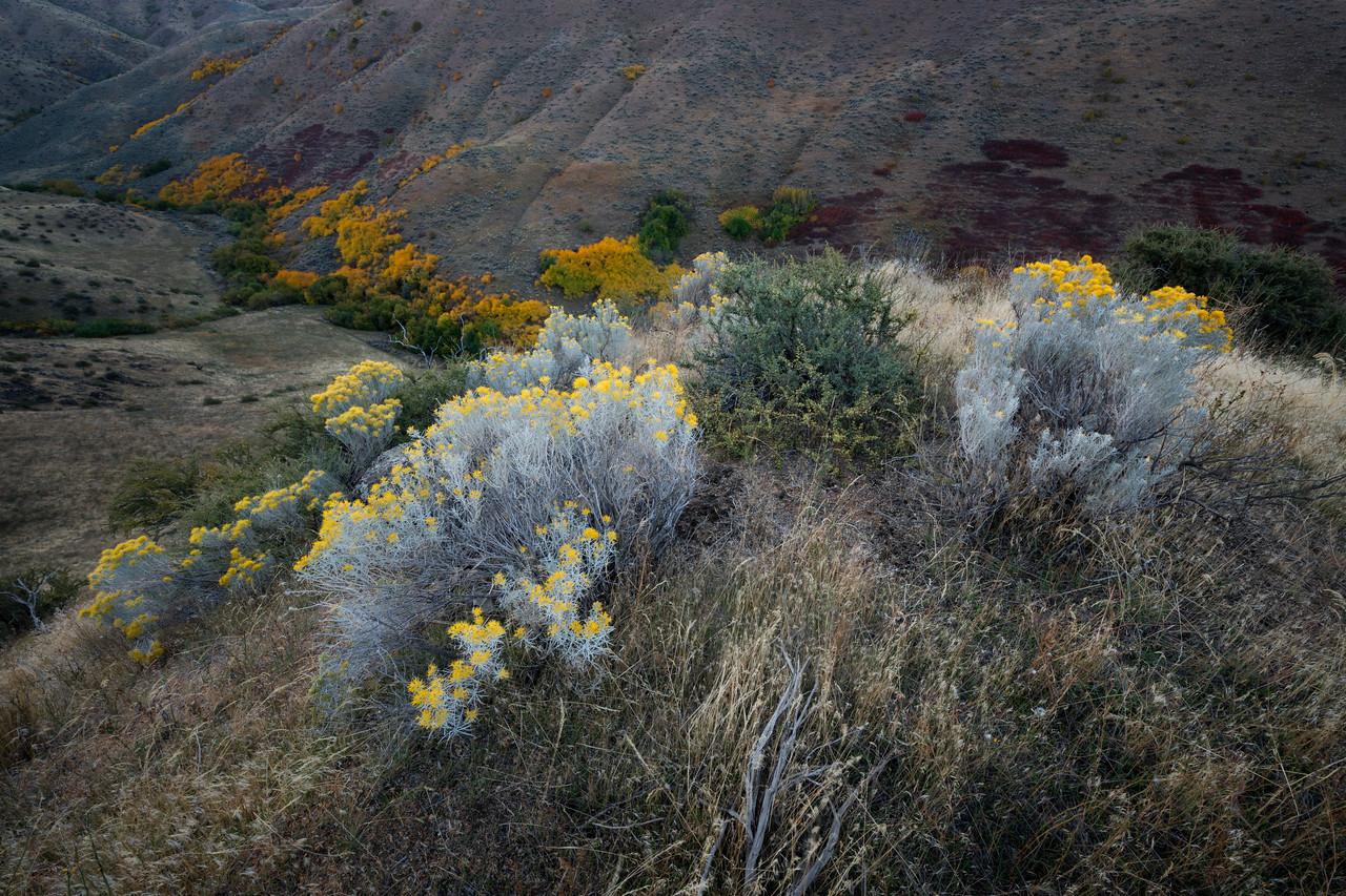 Simple Beauty, Boise Foothills - Idaho