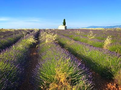 A field before weeding
