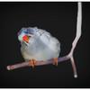 Curious Little Bird