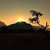 Pinon Sunset