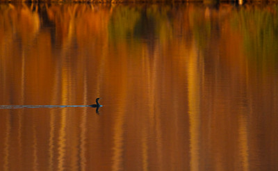 A cormorant in a magical place - Swimming River Reservoir in Colts Neck, NJ.