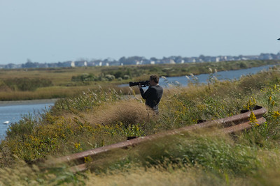 Steve Forman focusing on a Snowy White Egret - Edwin B. Forsythe Wildlife Refuge.