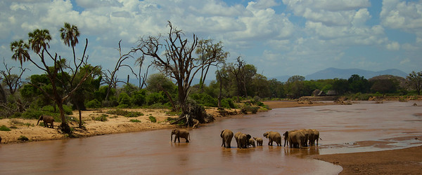 Elephants crossing river - Sambura National Reserve, Kenya