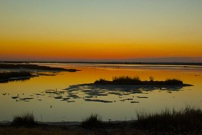 Edwin B. Forsythe National Wildlife Refuge, New Jersey