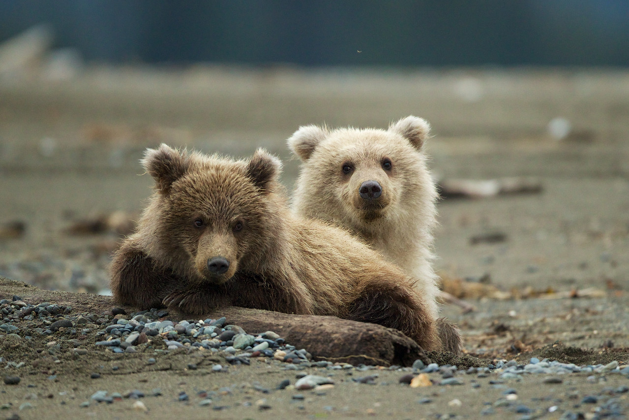 Brother and sister cubs very content after a meal from Mom.