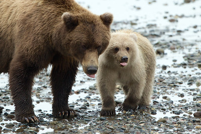 Mother and son acting like bears!