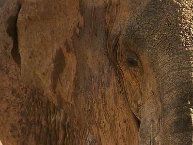 Samburu Game Preserve