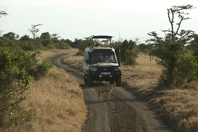 One of our safari trucks and a curious Jackal in the road.