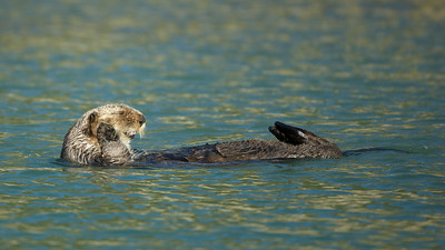"Otter  - ""Don't be shellfish""  the Puffin replied - ""Oh clam up!!""                                  (You had to be there)."