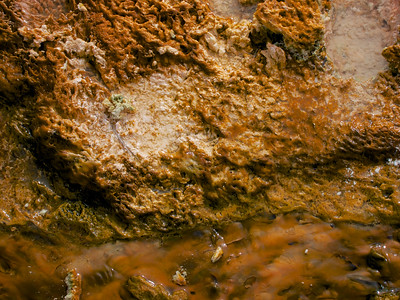 Bacteria growing in the runoff from a geyser.