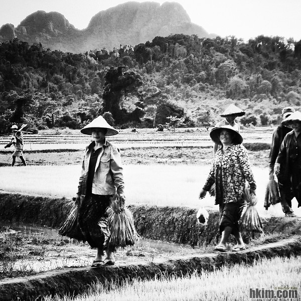 The Harvest<br /> Laos