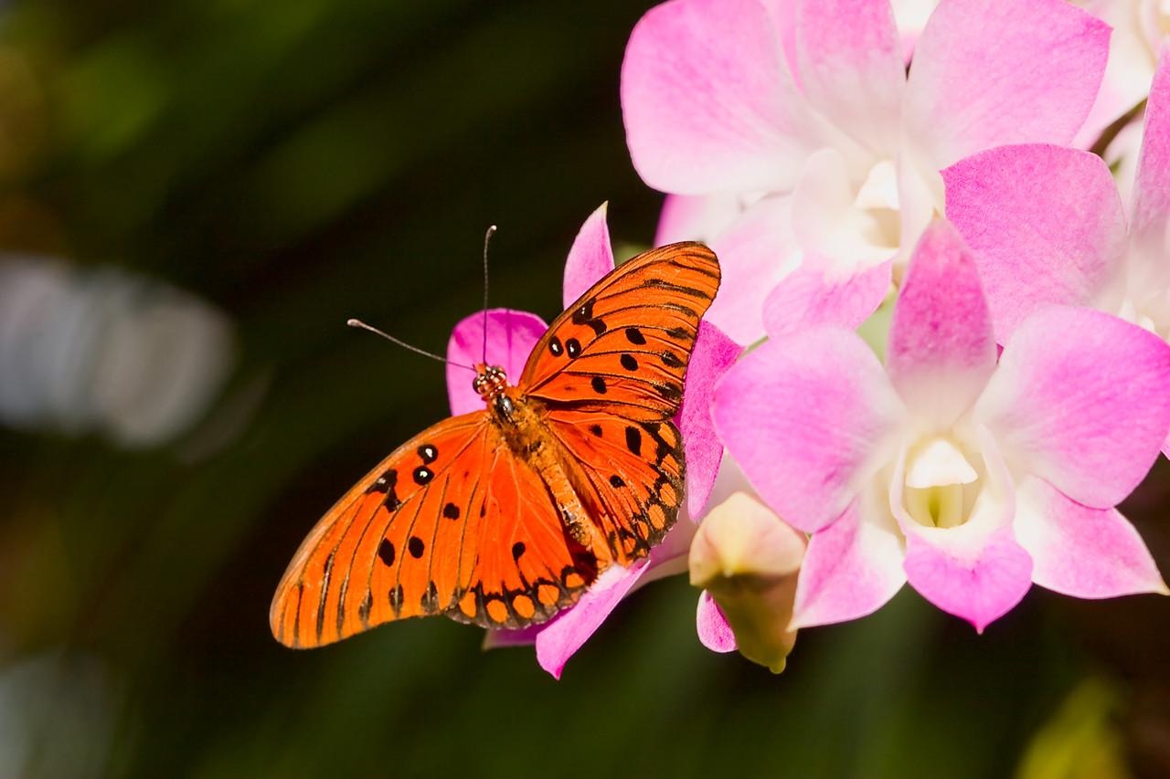 10) ButterFly 1