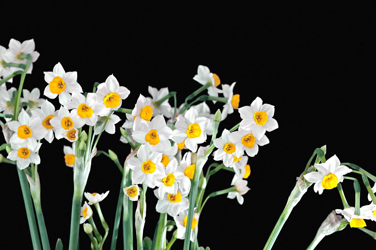 16) Lisa's Flower 5_TS