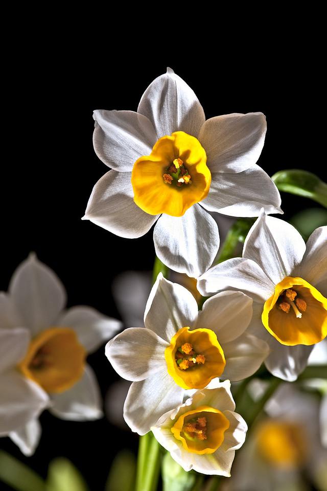 17) Lisa's Flower 1_TS V5T4996