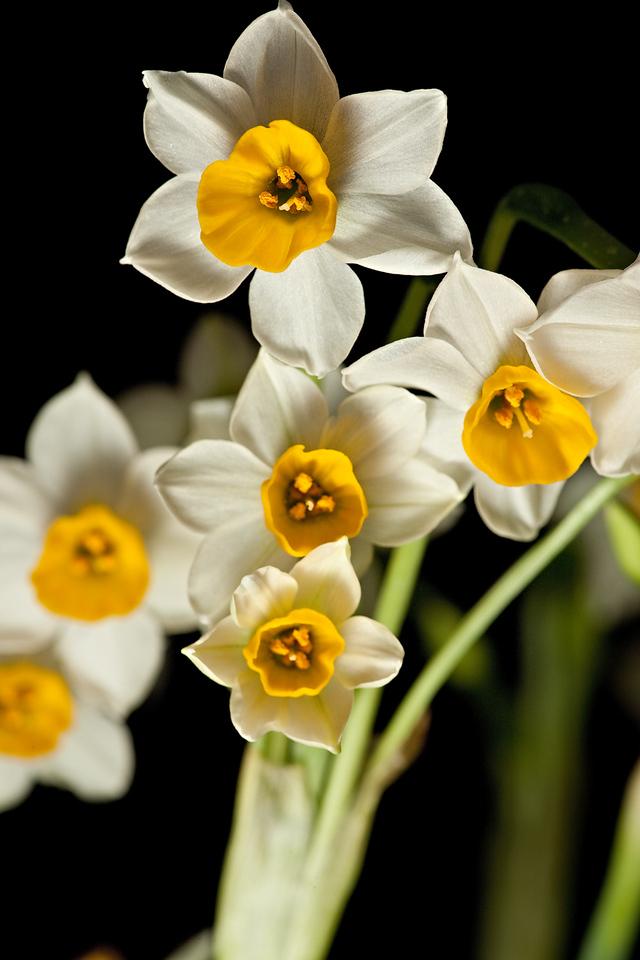 20) Lisa's Flower 4_TS V5T4996