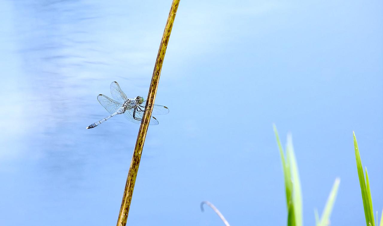 12) Dragon Fly Stick
