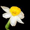19) Lisa's Flower 6_TS V5T4996_0000_