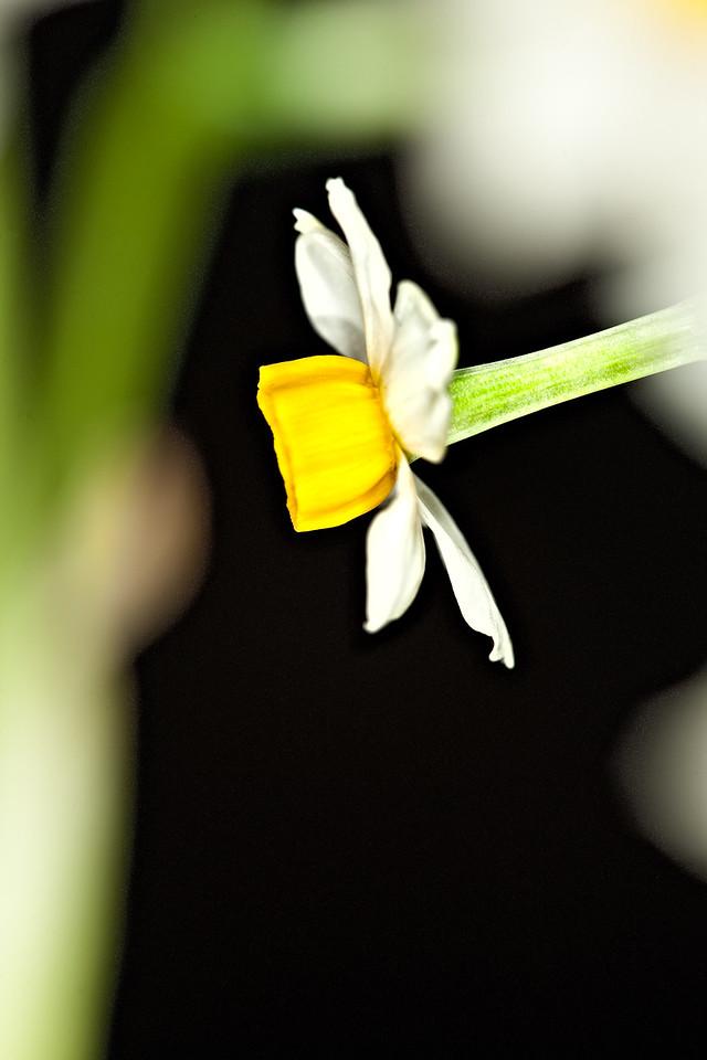 18) Lisa's Flower 3_TS V5T4996