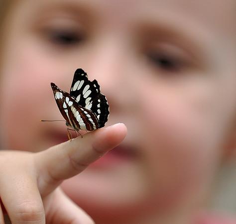 butterflyfingermay2010