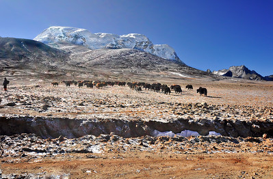 On the way to Gurudongmar Lake