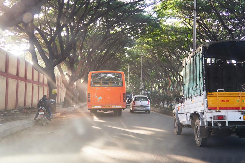 Light Rays and Tree Canopy - Bangalore, India