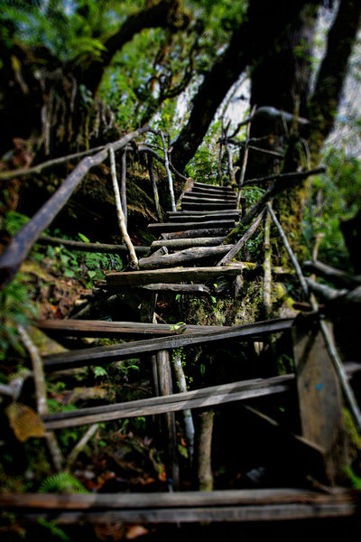 #413 Stairway in the Jungle