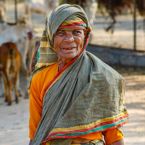 Portrait of a lady shephard and her cows in Hampi, Karnataka, South India, Asia