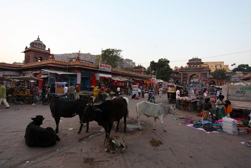 COWS AND MARKET. CENTRE OF JODHPUR. RAJASTAN. INDIA.