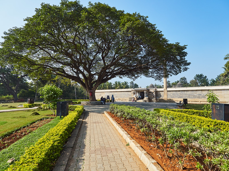 A Grand Tree - Somanathapura, India