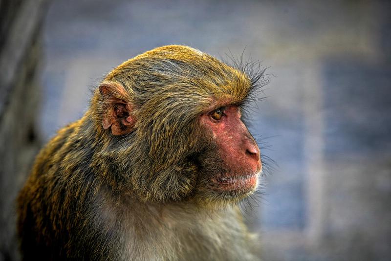 #IN029 Monkey