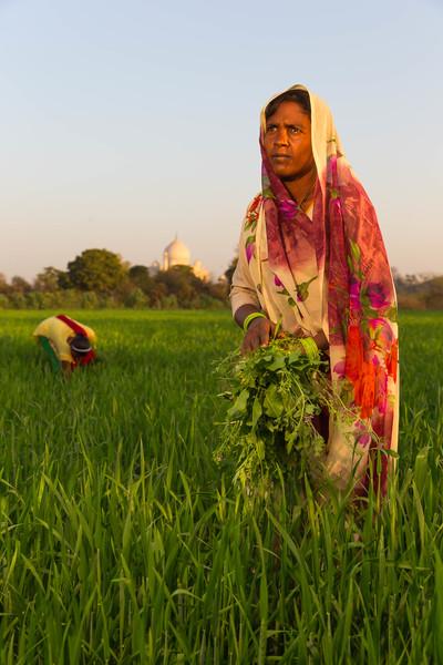 Across the Yamuna River (Agra, India)