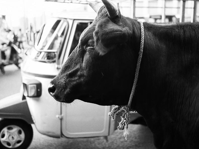 Cow and Tuk Tuk - Bangalore, India