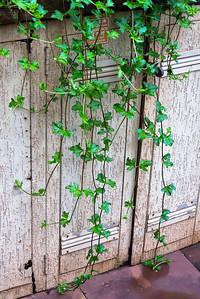 Dangling Vines