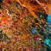So Much Color - Indonesia<br /> <br /> The palette of colors within the coral reefs of Indonesia is shocking. It is almost too much to take in - a numbing explosion of activity and ornamnet.