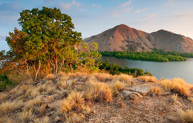Arid Islands - Indonesia  The Komodo area is not the lush jungle that you would expect along the equator. Instead, you have these perfect camel-hump grassy hills jetting out of the cobalt ocean, rimmed with maze-like mangrove forests and infused with giant lizards and small monkeys.
