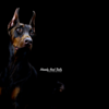 Lexi the Doberman