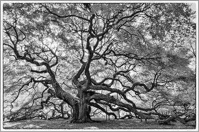 Angel Oak, James Island, South Carolina