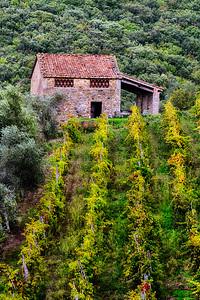 Up the vineyard to the old house...  San Gusmè, Chianti, Toscana