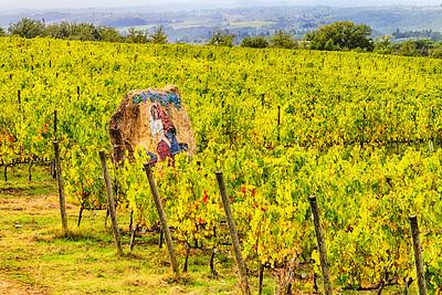 Guardian of the Vines ~ San Felice, Chianti, Toscana