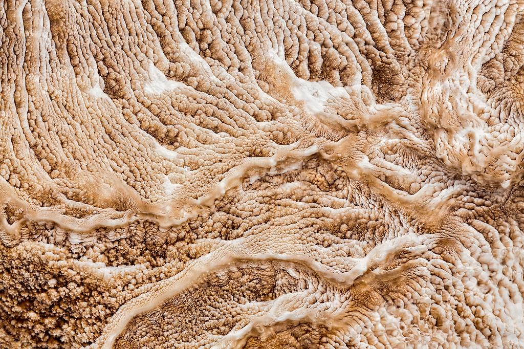 Complex Living Organisms